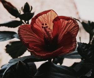 flowers, nature, and theme image