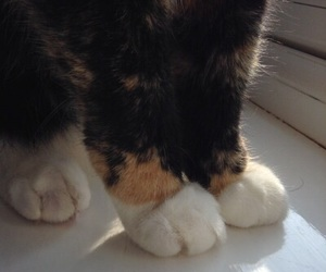 cat, paws, and tumblr image