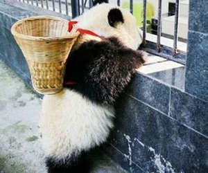 china, kawaii, and panda image