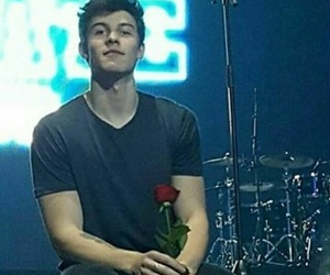 shawn mendes and rose image