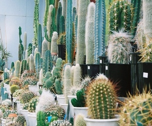 cactus, nature, and plants image