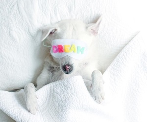 adorable, animal, and bed image
