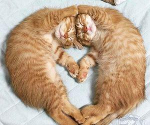 cat, pet, and animal image