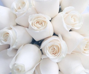 roses, chic, and white image