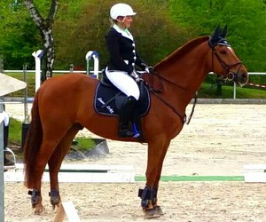 equestrian, show jumping, and laros lett image
