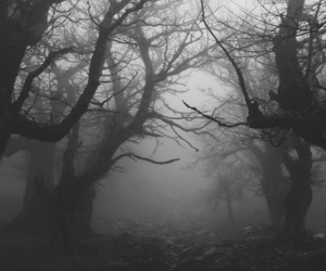 forest, tree, and dark image
