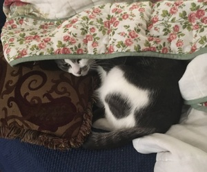 cat, cute cat, and kitty image