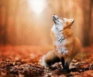 autumn, fox, and animal image