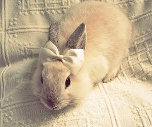 boe, bunny, and vintage image