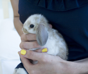 bunny, fluffy, and cute bunny image
