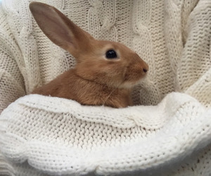 brown, cute bunny, and rabbit image