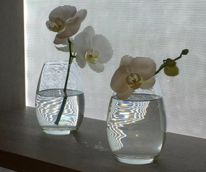 flowers, white, and glass image