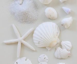 white, shell, and beach image