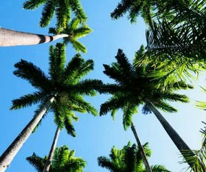 palm trees, summer, and by kristina bro image