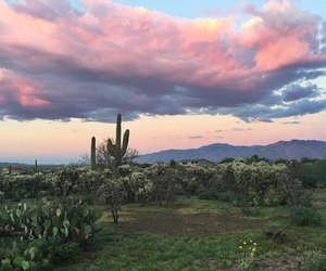 sky, cactus, and clouds image