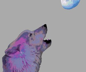 wall art, wildlife, and wolf image