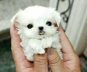 adorable, puppy, and small image