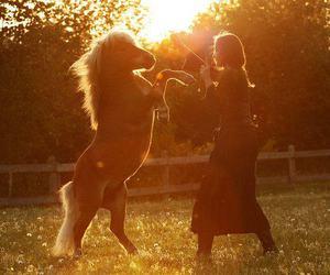 animal, animals, and equine image