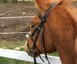 horse, horse riding, and horseriding image
