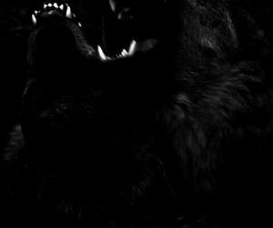 wolf, animal, and theme image
