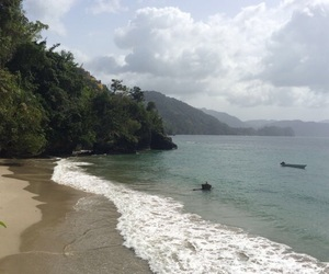 beach, tropical, and green image