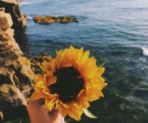 flower, sunflower, and aesthetic filter image