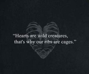 love, hearts, and wild image