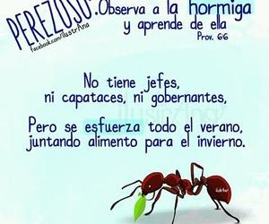 versículos and hormiga image