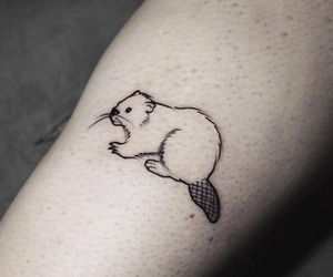 beaver, outline, and sketch image