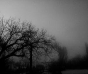 b&w, mist, and nature image
