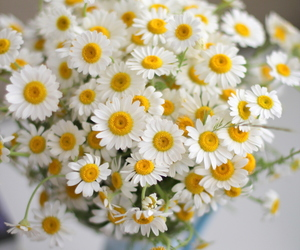flowers, daisy, and spring image