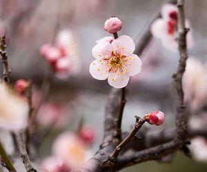 flower, japan, and platinumheartaward image