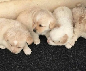 dogs, Greece, and puppies image