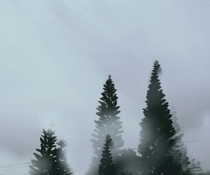 alone, cold, and forest image