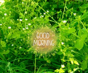 flowers, spring, and good morning image