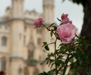 fairy, pink, and england image