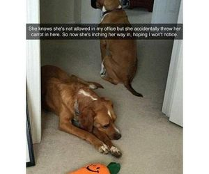 dogs, funny, and tumblr image
