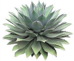 overlay, plant, and editingneed image