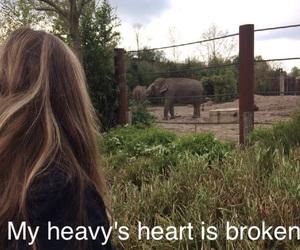 broken, elefants, and heart image