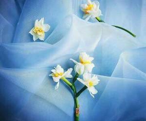 blue, tulip, and ًورد image