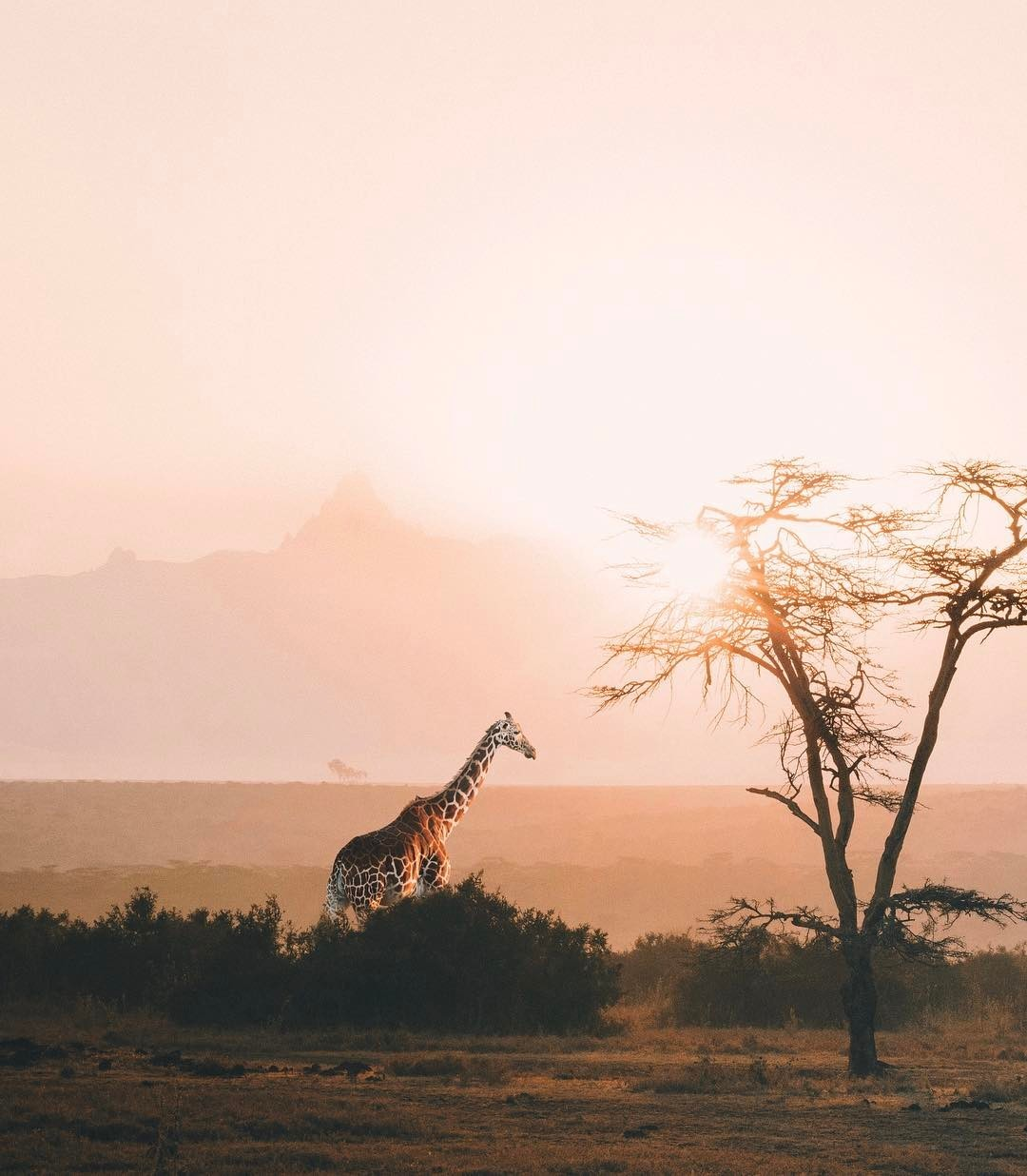 africa, explore, and giraffe image