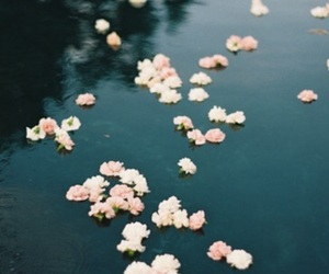 flowers, wallpaper, and water image