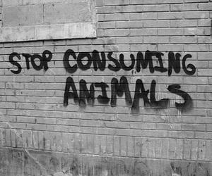 animal rights, b&w, and brick image