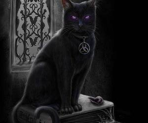 cat, black, and magic image