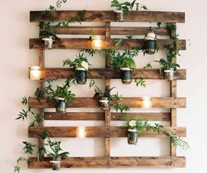 plants, diy, and decor image