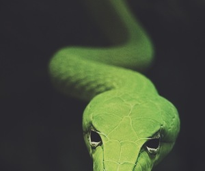 snake, animal, and black and white image