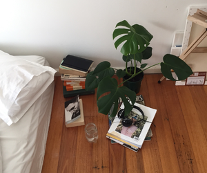 room and plants image