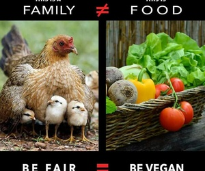 animals, Chicken, and compassion image