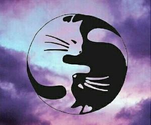 cat, wallpaper, and tumblr image