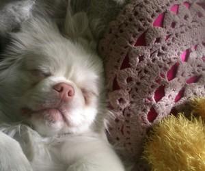 dog, sweet, and tiny image